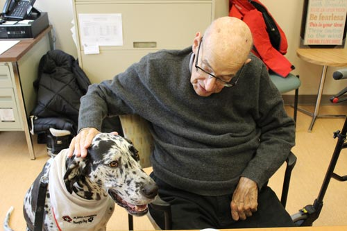 David Campbell, a patient at Toronto Rehab, gives Harlow the therapy dog a head scratch