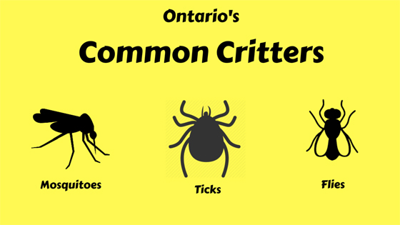 Common critters infographic